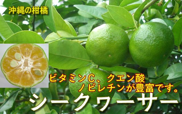 沖縄柑橘 シークヮーサー