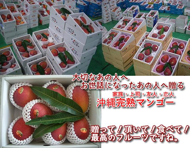 沖縄完熟マンゴー販売