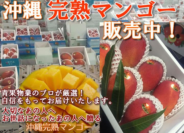 沖縄マンゴー販売