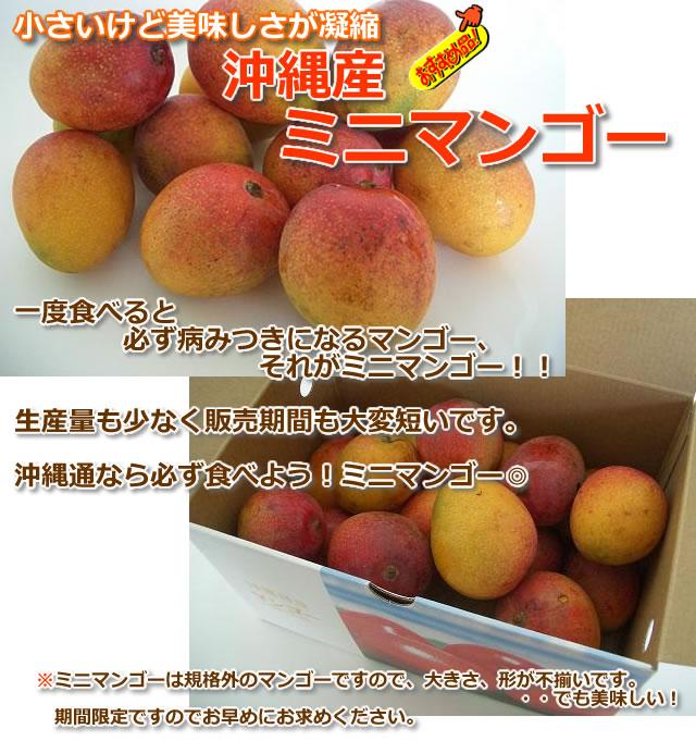 沖縄ミニマンゴー
