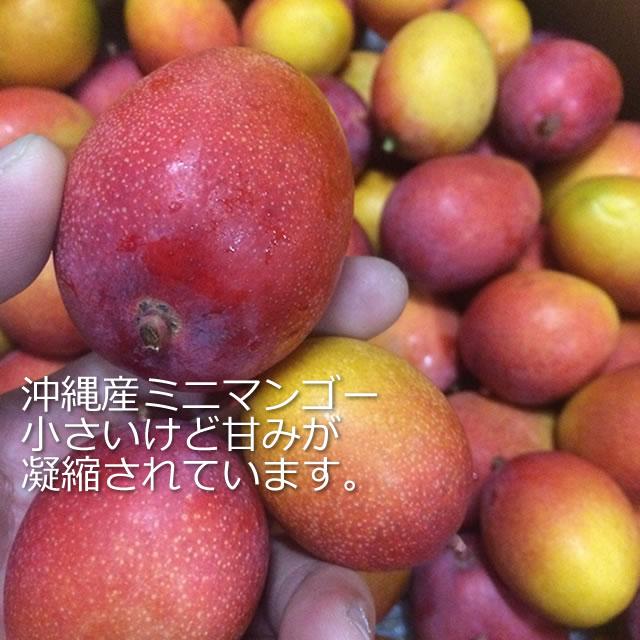 沖縄産ミニマンゴー通販