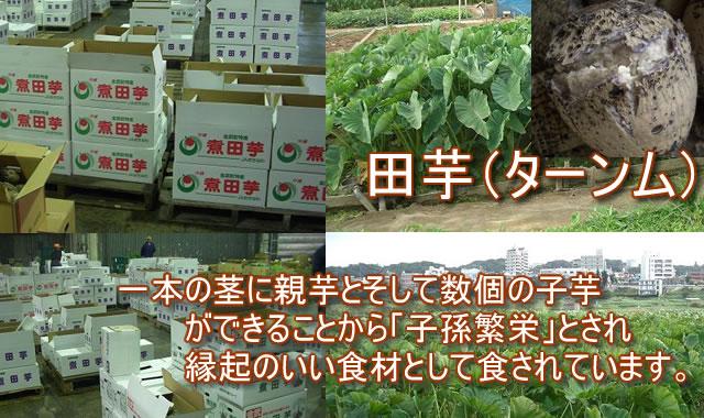 沖縄 田芋(ターンム)販売